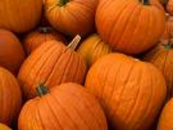 farm1_fall_ornamentals_finished013001.jpg